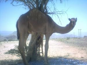 Ed in Oman